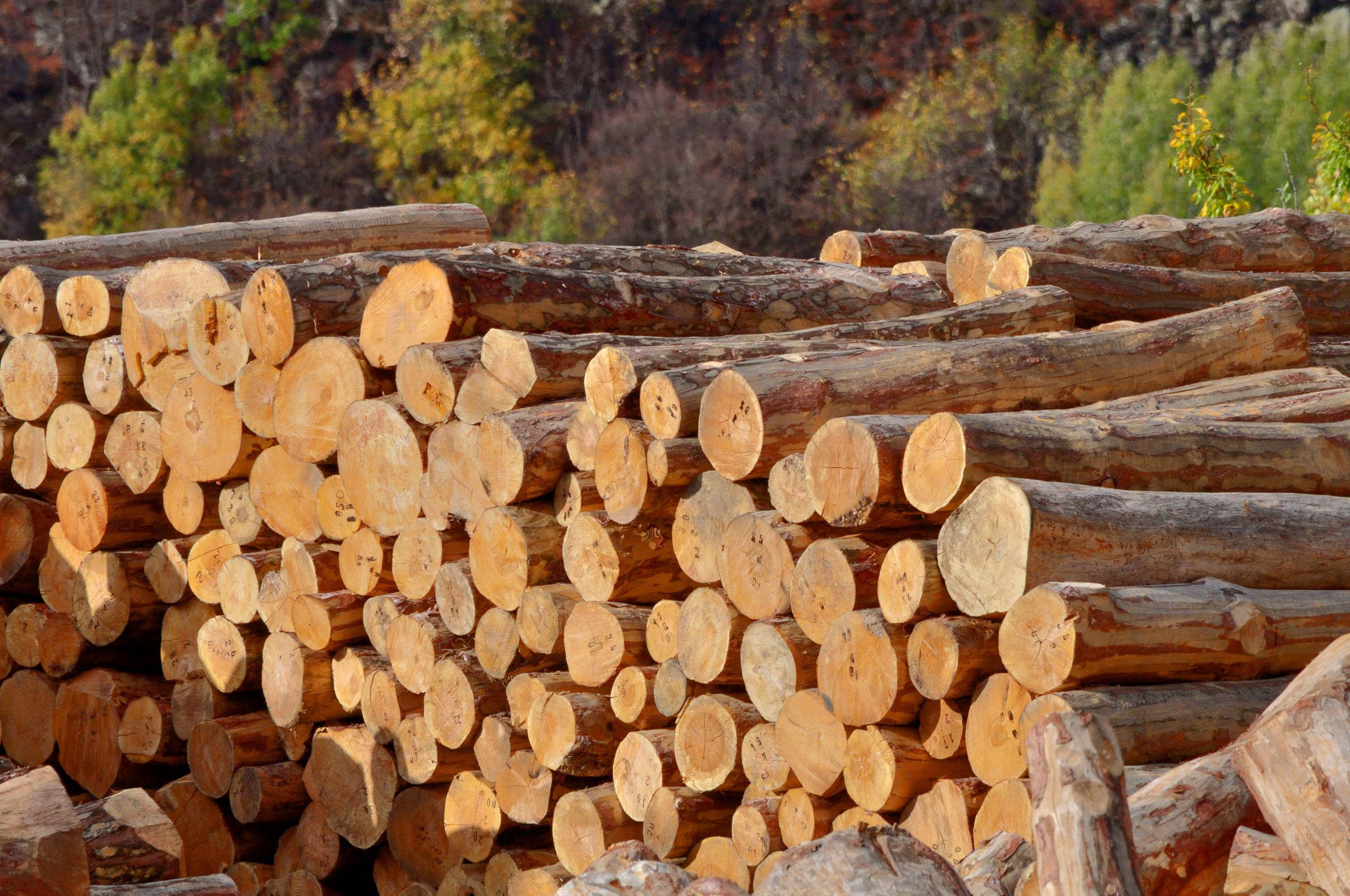 wood innovation grant sunroc
